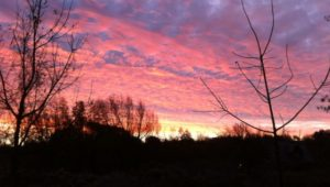 Dear Mother Earth A Morning Walk Sets the Whole Day Afire