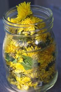 dandelion vinegar 2