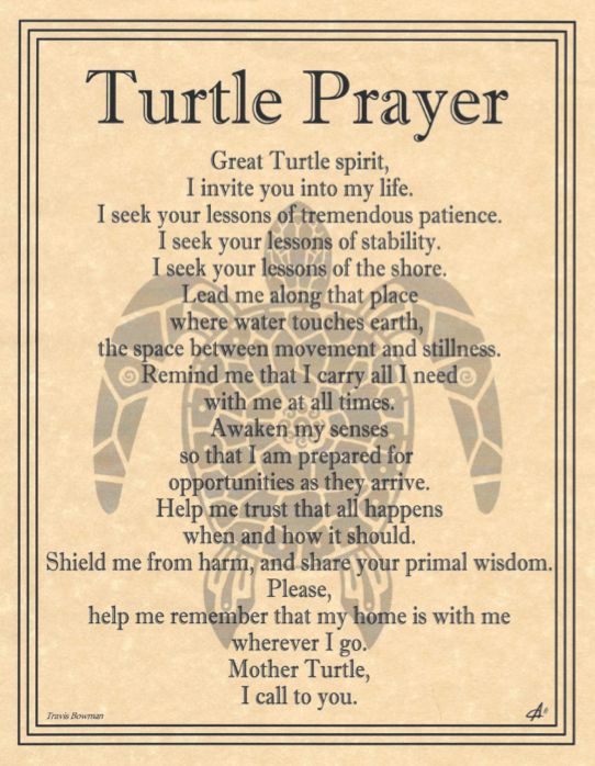 Turtle prayer by Travis Bowman